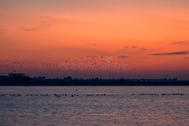 Vögel im Flug angesichts des Sonnenuntergangs über dem See stockfotos