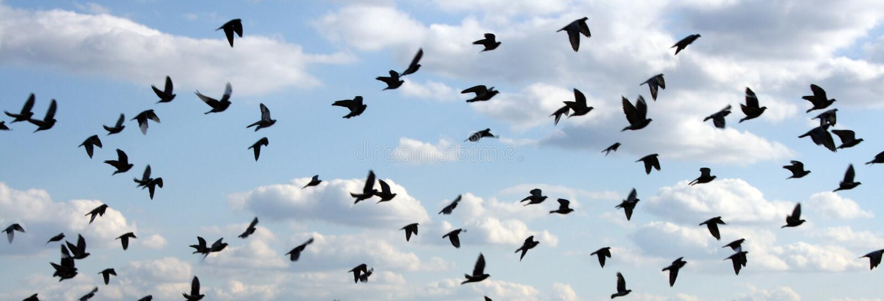 Vögel im Himmel lizenzfreies stockfoto