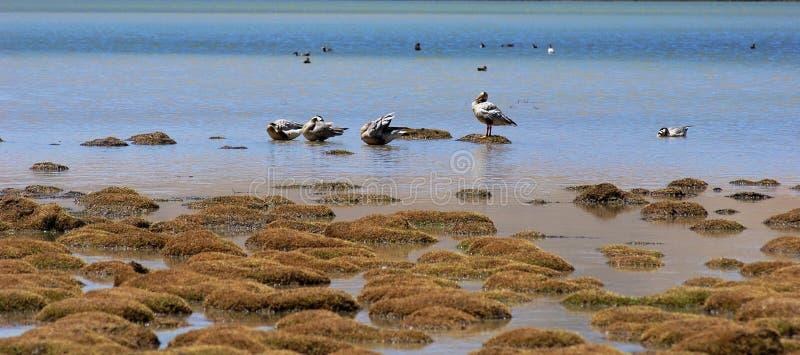 Vögel im See stockfoto