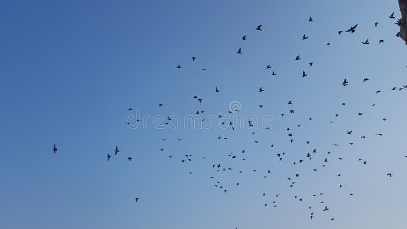Vögel mit Schattenbildszene auf dem klaren Himmel stockbilder