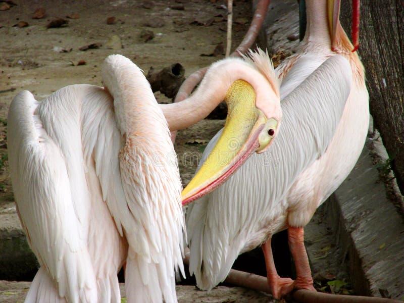 Vögel oder Stangen stockfoto