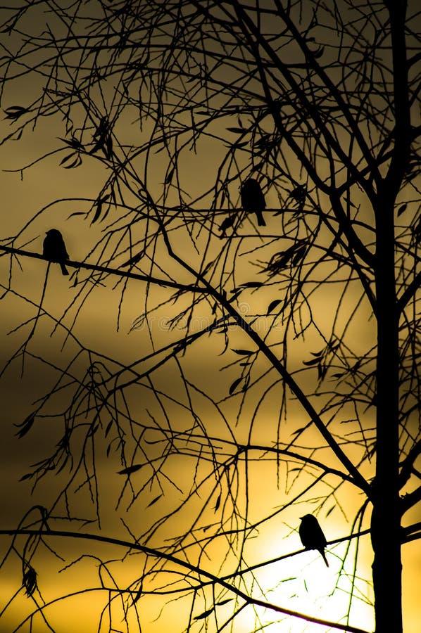 Vögel am Sonnenuntergang stockbilder