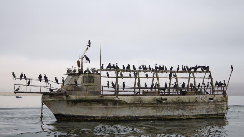 Vögel stehen auf einem verlassenen Schiff still stockbild
