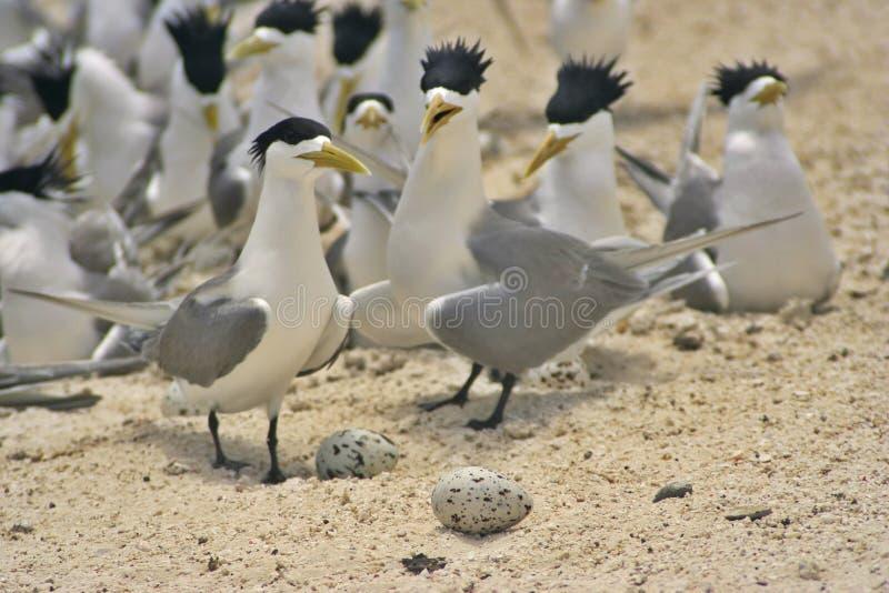 Vögel u. Eier stockfotos