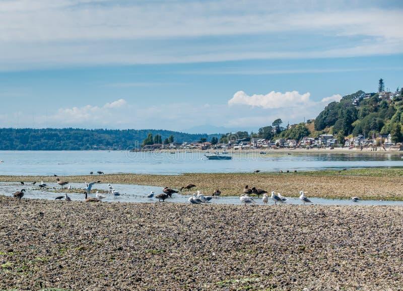 Vögel und drei Baum-Punkt lizenzfreie stockfotografie