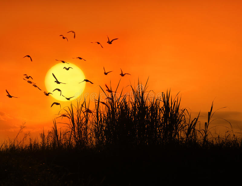 Vögel und Sonne stockbild