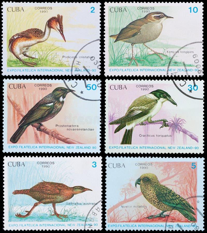 Vögel von Neuseeland lizenzfreie stockbilder