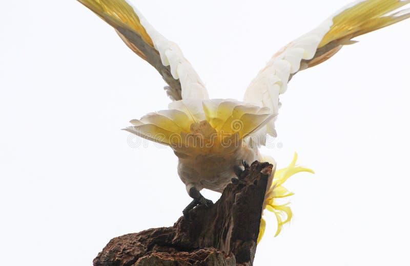Vögel von Süd-Australien, lineares Park-Paradies lizenzfreie stockfotografie