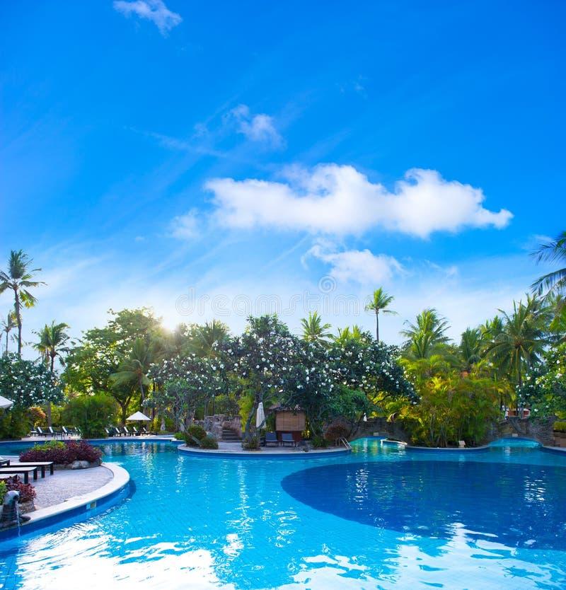 växter pool omgivet simma som är tropiskt arkivbild