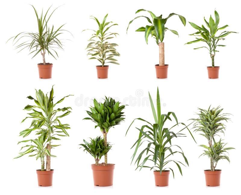 växtkrukatree arkivfoto