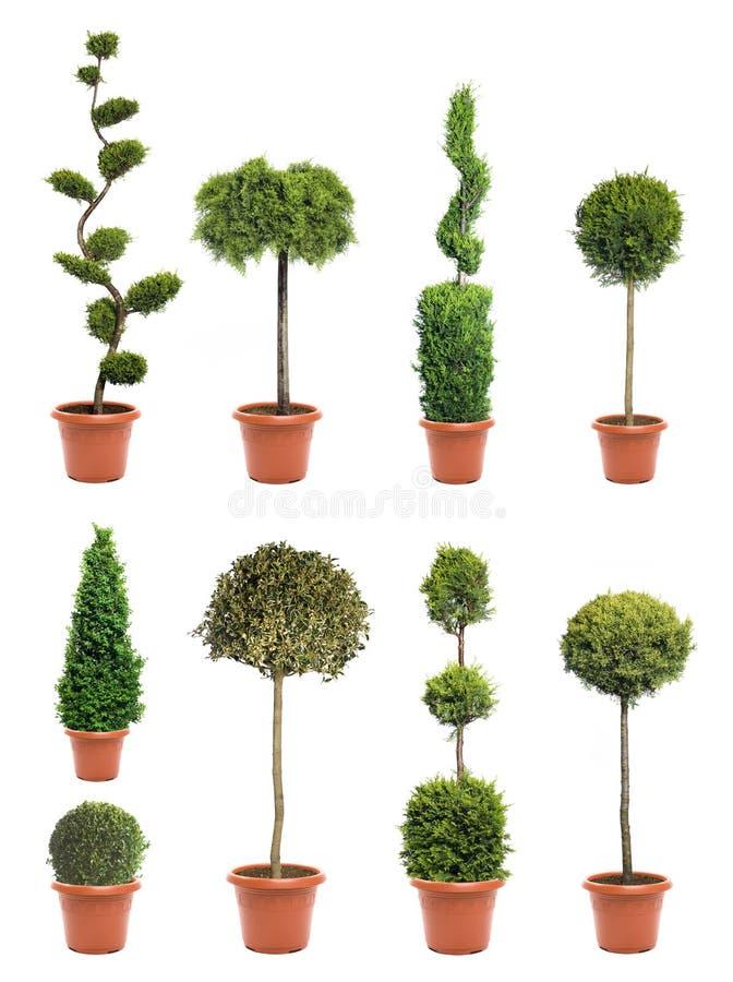 växtväxtkruka royaltyfria bilder