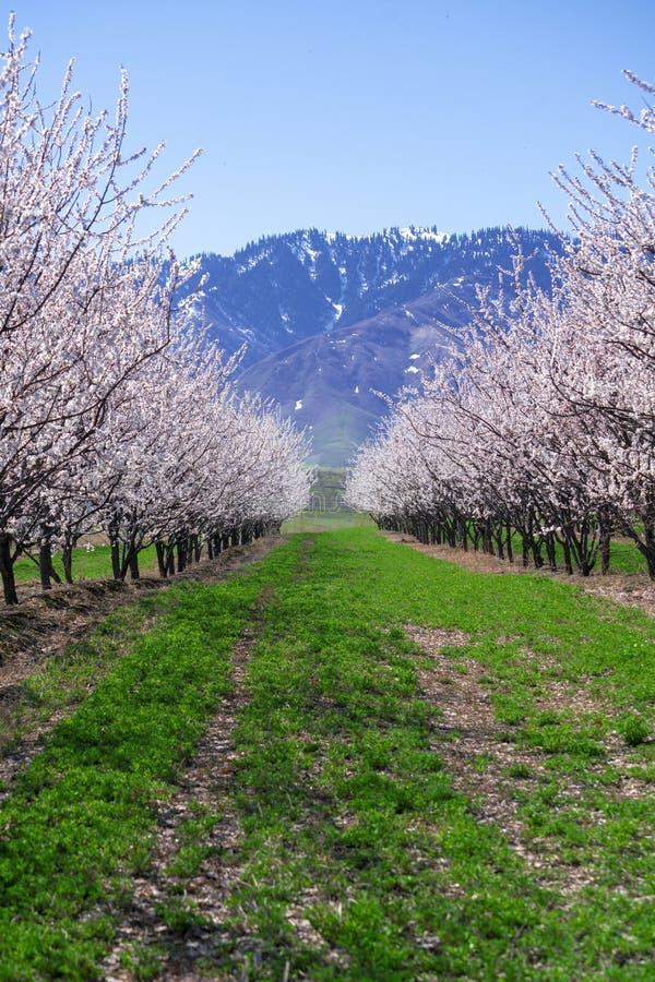 V: Flores brancas espantosas e florescentes com céu azul na primavera imagens de stock royalty free