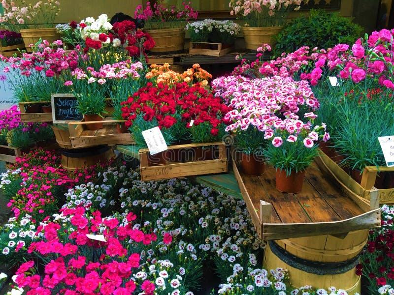 ?v?nement de FLOR dans la ville de Turin, Italie Fleurs, fascination et beauté de Colourfulo photos stock