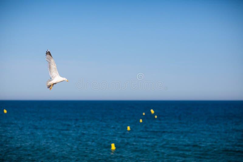 V?o da gaivota sobre o mar imagem de stock royalty free
