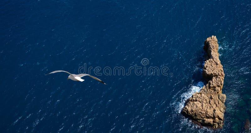 Vôo da gaivota sobre o mar foto de stock