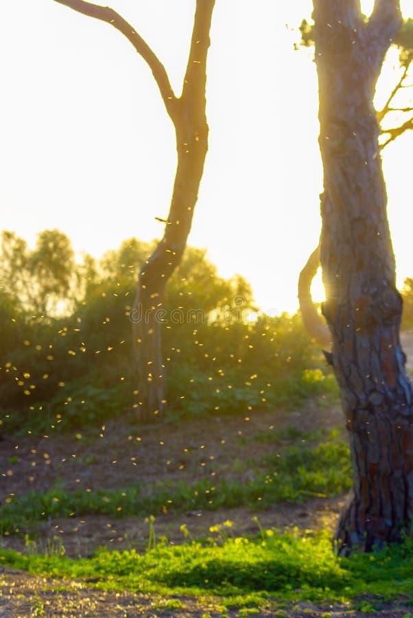 Download Por do sol vivo imagem de stock. Imagem de árvore, sunset - 29842799