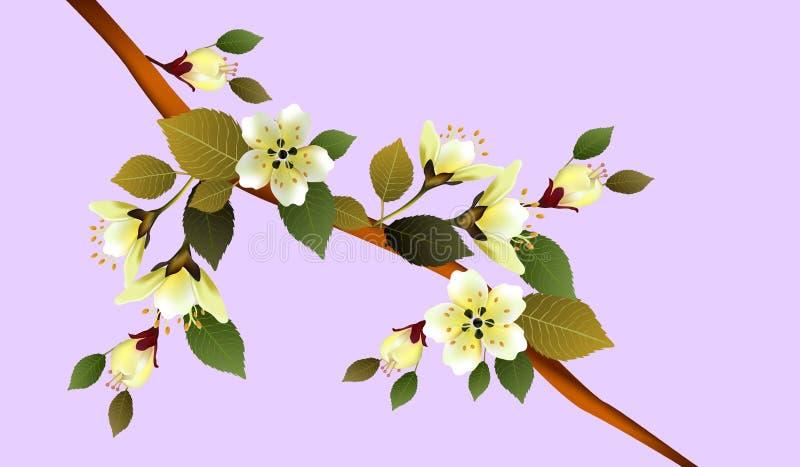 V?r Sakura blommor blommar på en rosa bakgrund royaltyfri illustrationer