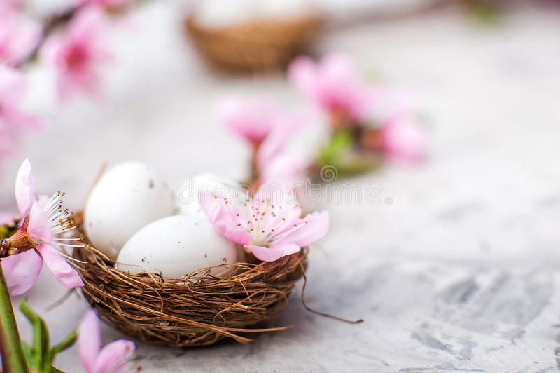 V?rblomningbegrepp Påskbegrepp, ägg i ett rede, närbild för blomningträd och kopieringsutrymme Rosa naturlig textur av naturlig f arkivbild
