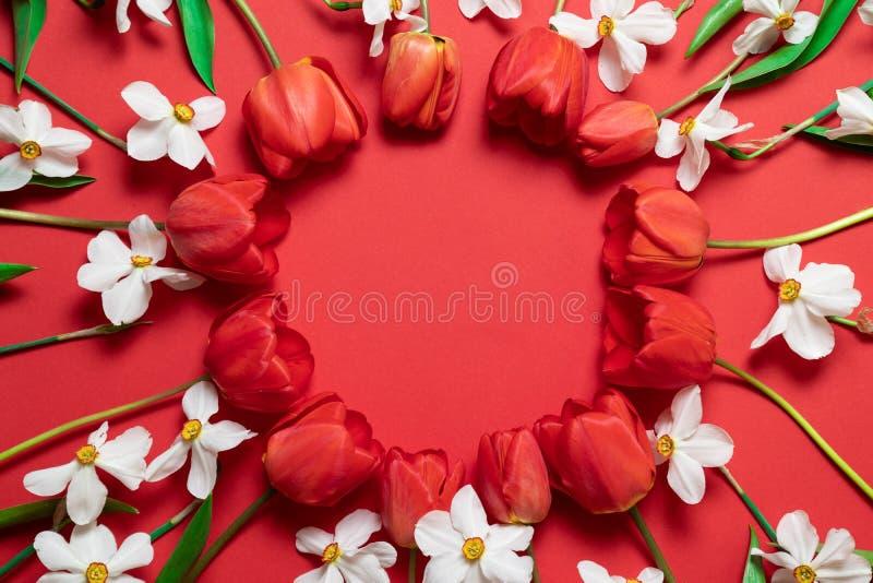 V?rferiebegrepp Ram av härliga röda tulpan och påskliljablommor på en röd bakgrund fotografering för bildbyråer
