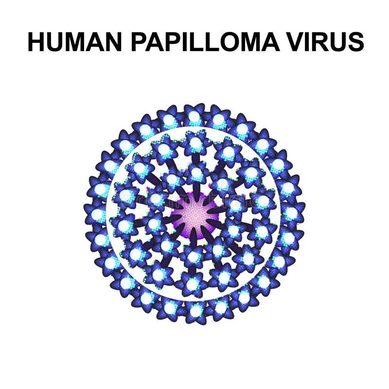 V?rus de papiloma humano A estrutura do popilloma do vírus Infographics Ilustra??o do vetor no fundo isolado ilustração stock