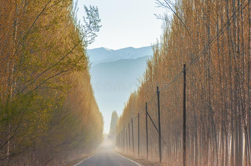 V-shape road with trees to the snow mountain foot stock photo