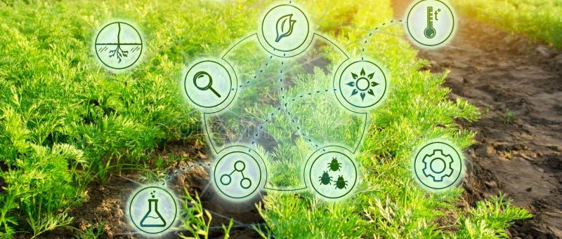 V?xande organiska gr?nsaker med nya tekniker Utveckling av innovation och forskning Investera i lantbruk Studiekvalitet av arkivbild