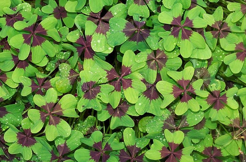 V?xt blad, flora, blomma