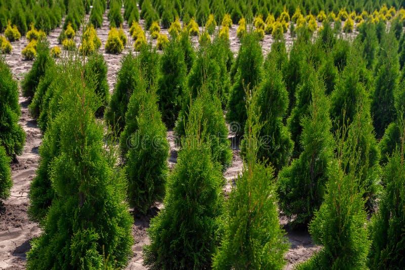 V?xtbarnkammare Utomhus- tr?dg?rds- lagermitt med unga plantor fotografering för bildbyråer