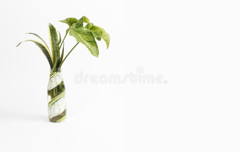 Va il templete tropicale verde dello spazio in bianco della decorazione della foglia immagine stock