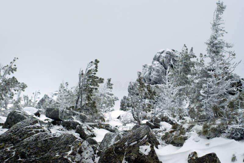 Vaag de winterlandschap op een bergplateau stock foto