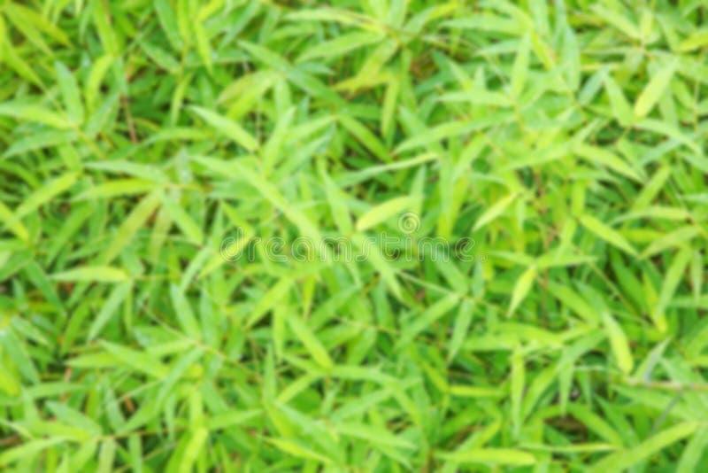 Vaag groen bamboeblad stock fotografie