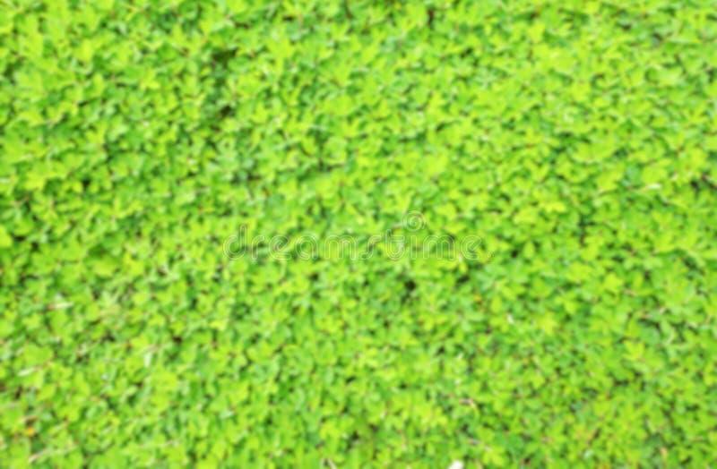 Vaag groen klein blad stock foto's