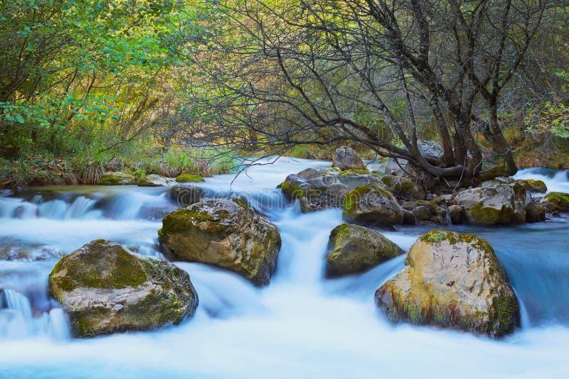 Vaag rivierwater met boom en rotsen binnen en groene bomen en installaties rond bij glanzende dag stock afbeeldingen