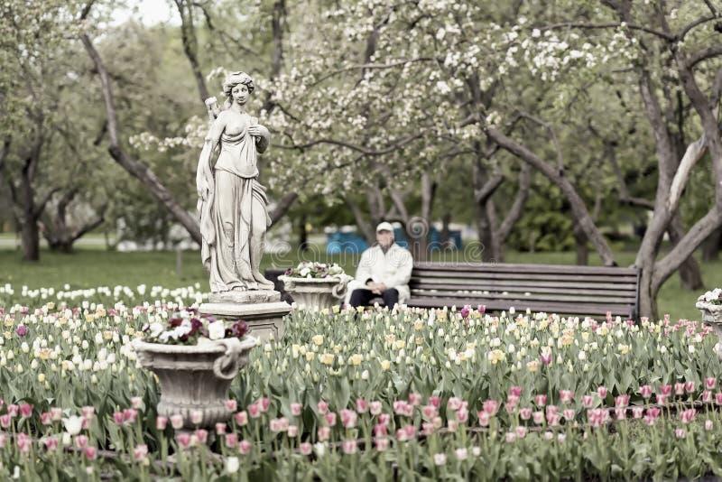Vaag uitstekend beeld van onherkenbaar bejaarde, gepensioneerde, het eenzame rusten in bloeiend park Selectieve nadruk De lente stock fotografie