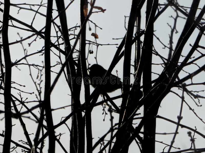 Vaag vogelsilhouet onder donkere takken royalty-vrije stock fotografie