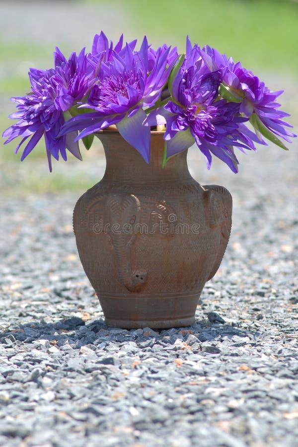 Vaas van Purpere lotusbloem stock foto's