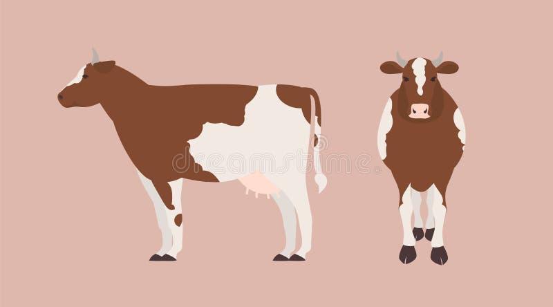 Vaca aislada en el fondo claro. Conjunto de retratos de animales herbívoros domésticos lindos, carne de vacuno o ganado lechero, libre illustration