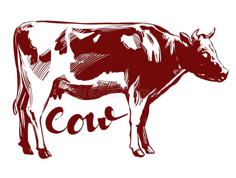 Vaca - animal doméstico, esboço tirado da ilustração do vetor da mão de exploração agrícola ilustração do vetor