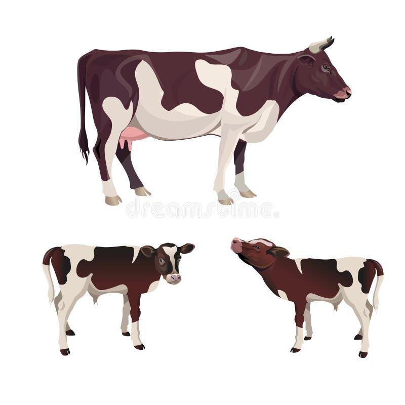 Vaca com vitelas ilustração do vetor