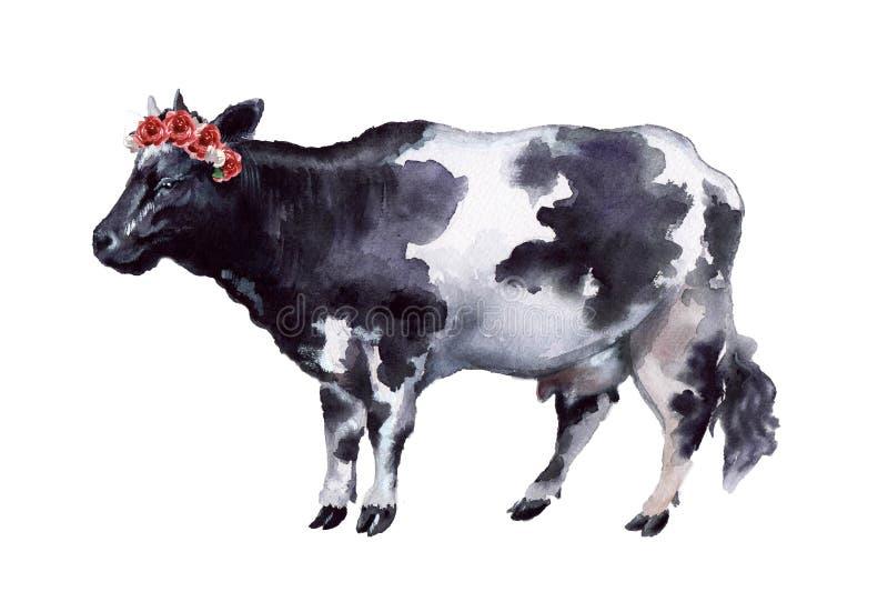 Vaca da aquarela no fundo branco ilustração royalty free