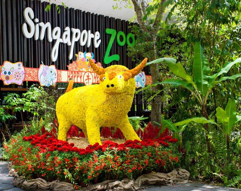 Vaca da flor no jardim zoológico de Singapore imagem de stock