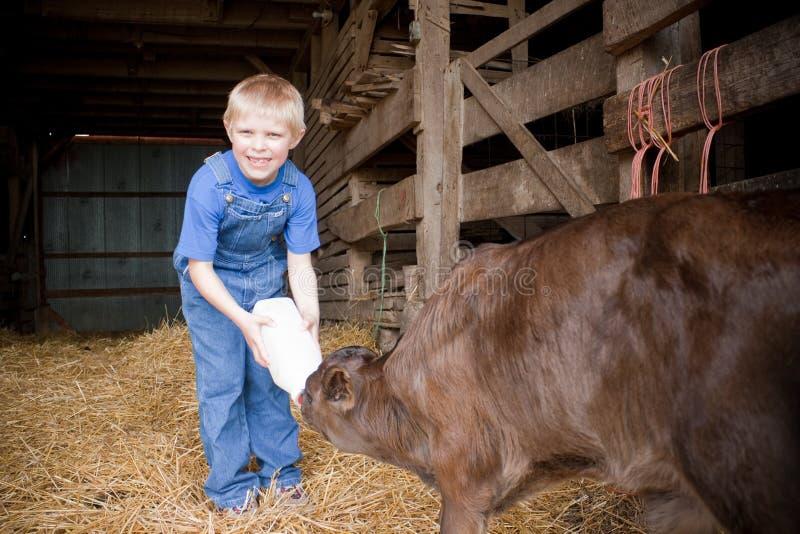 Vaca de alimentação do bebê do menino foto de stock