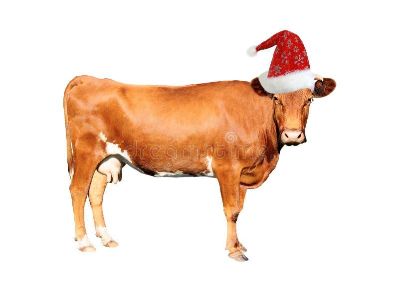 Vaca de Brown foto de archivo