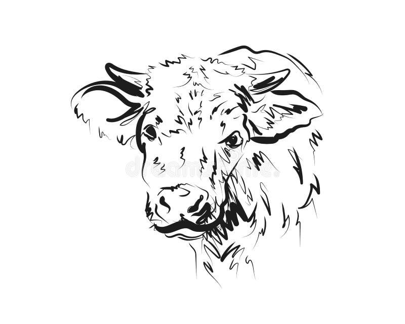 Vaca de la cabeza del bosquejo del vector imagen de archivo libre de regalías