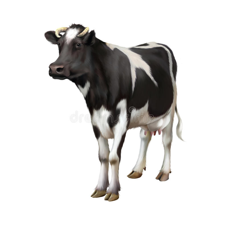 Vaca derecha aislada en el fondo blanco libre illustration