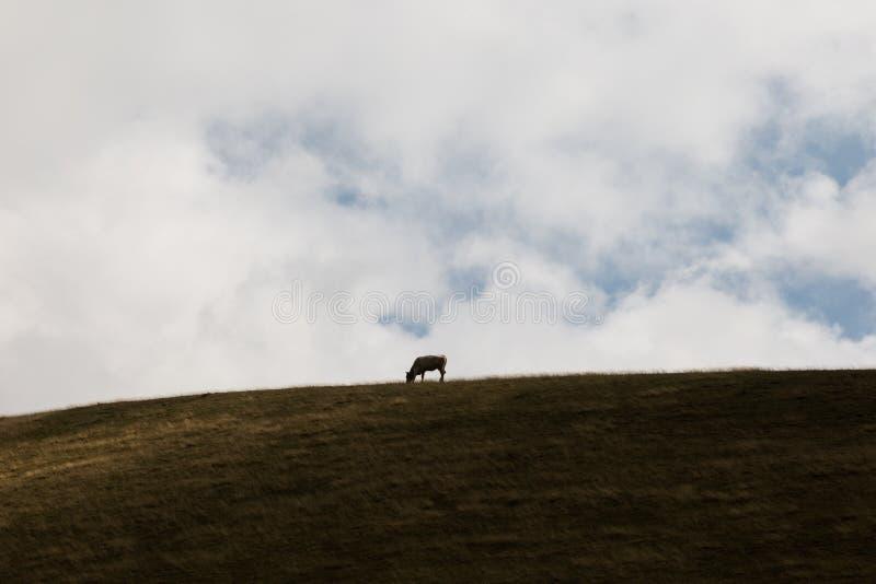 Vaca e céu imagem de stock royalty free