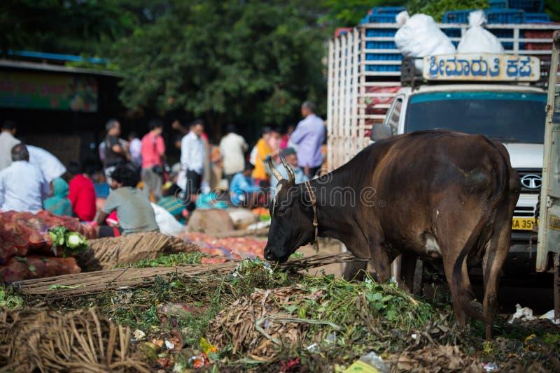 Vaca en la cadera de la basura en mercado local de la mañana en Hospet, Karnata foto de archivo libre de regalías