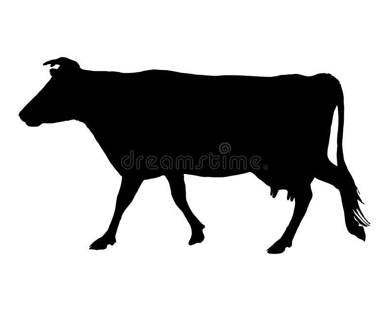 Vaca no branco
