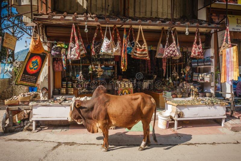 Vaca no fron da loja de lembrança em Rishikesh, Índia imagem de stock
