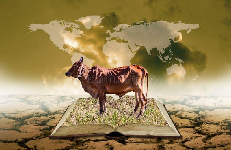 Vaca no livro aberto na terra seca com a folha de prova do mapa do mundo no céu, conhecimento da agricultura imagem de stock royalty free